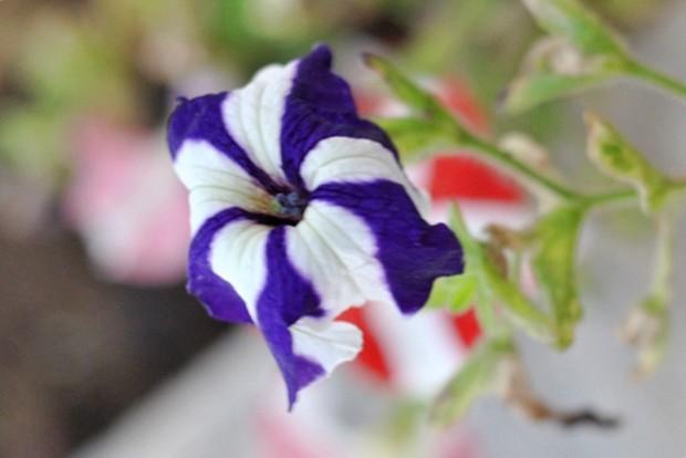 imagem de flores com mistura de cores na brisa de primavera