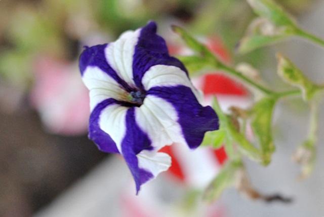 Mistura de cores em flores na brisa de primavera