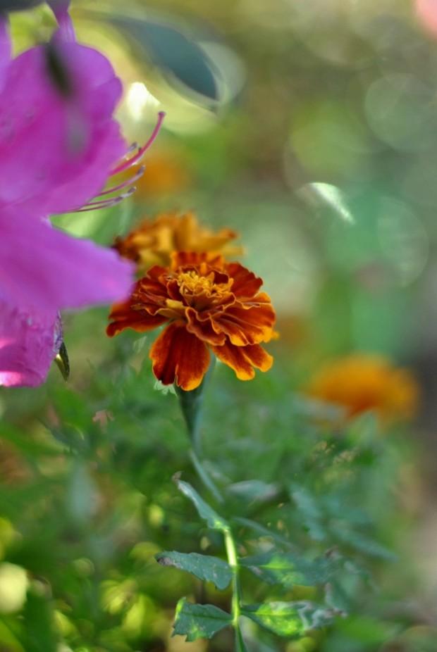 imagem de flores em brisa de primavera