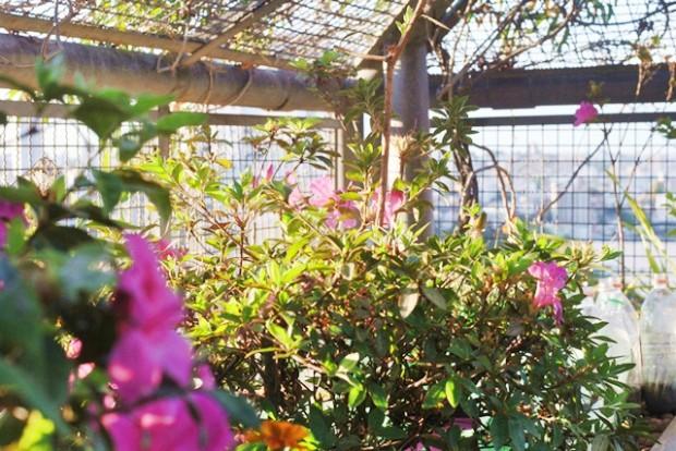 imagem de flores em jardim suspenso na primavera